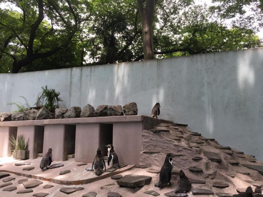 夢見ヶ先動物公園