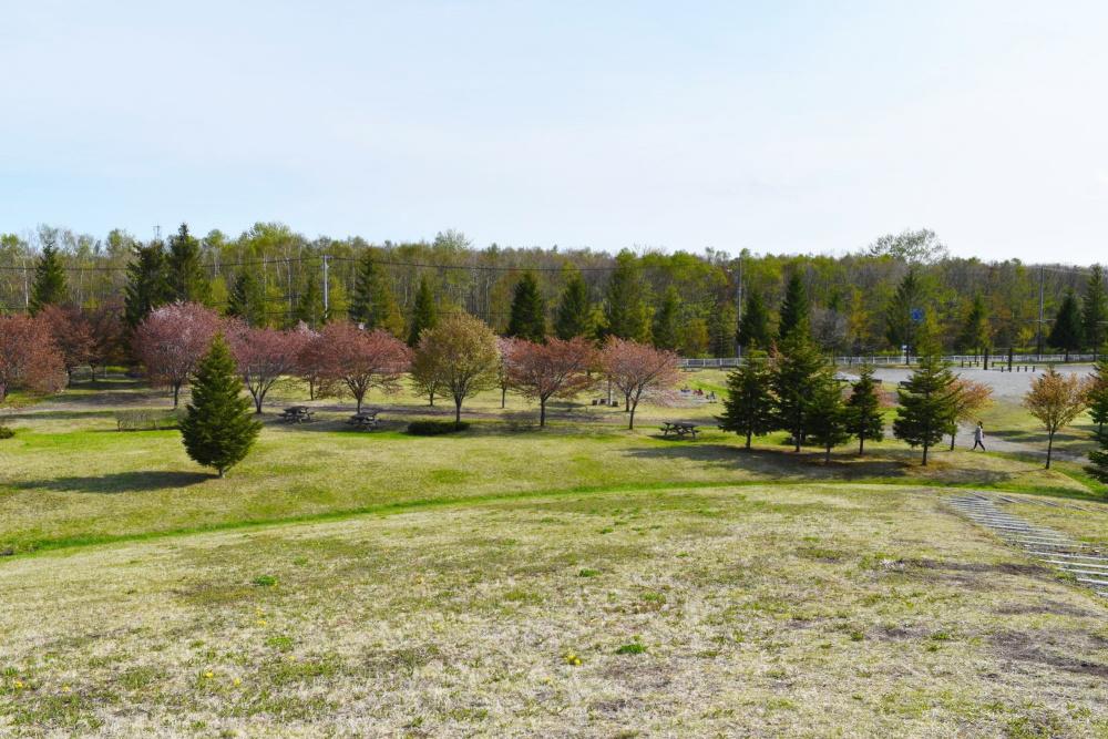 ハヤブサ公園