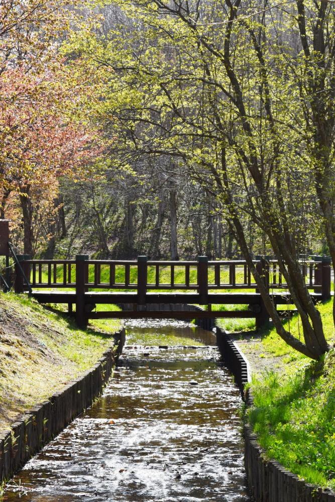 泉沢自然の森