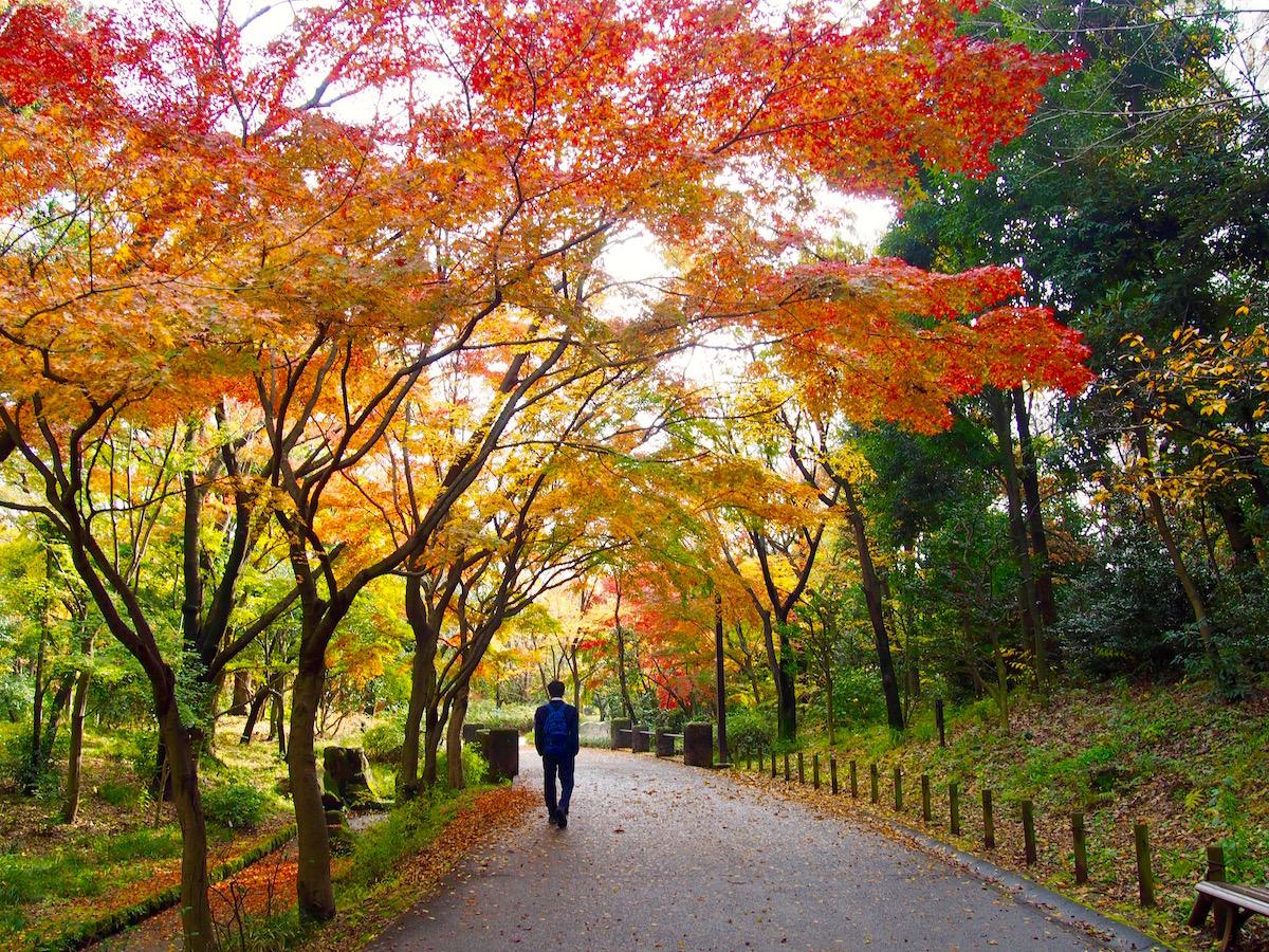 春の風公園(東京都練馬区)