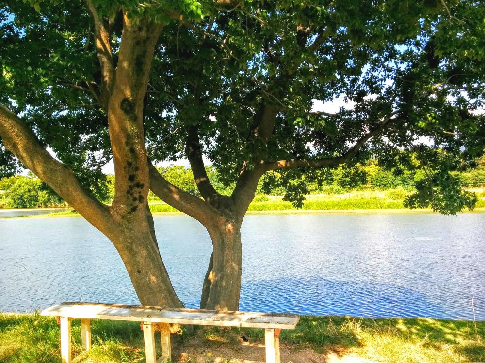 武庫川河川敷公園