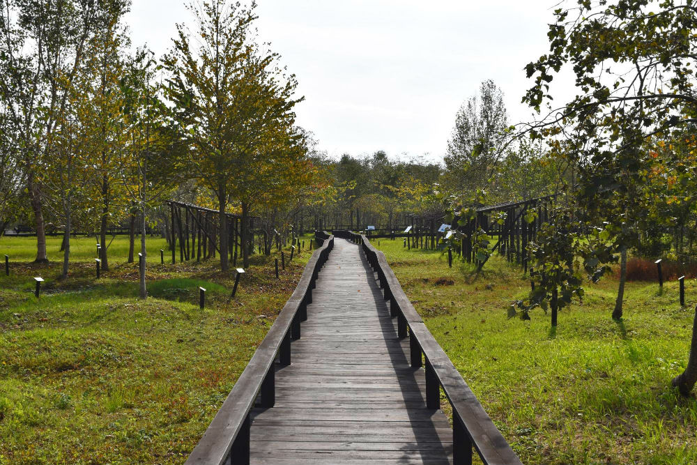ポロト公園