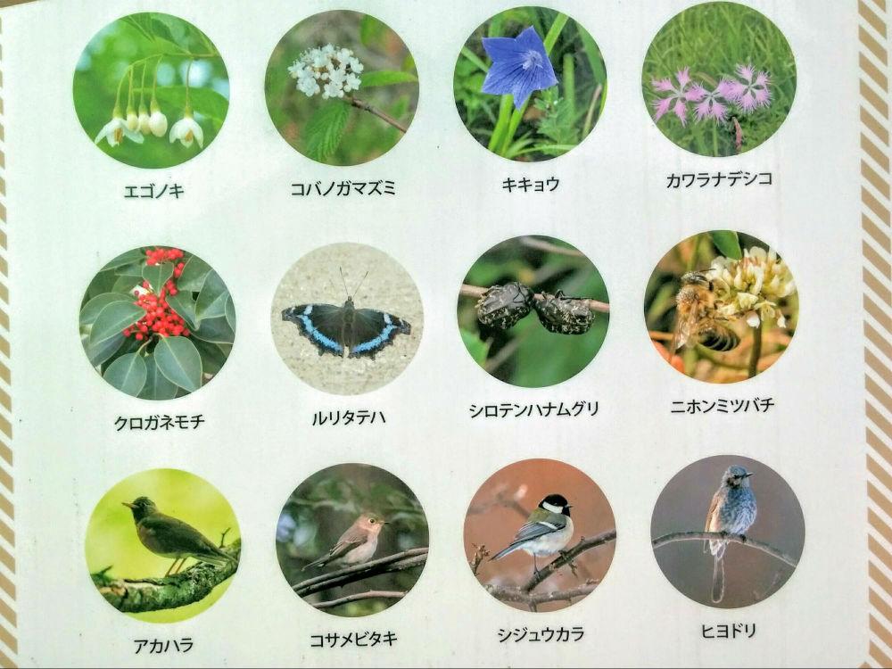 尼崎の森中央緑地