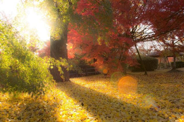 木曽の滝公園