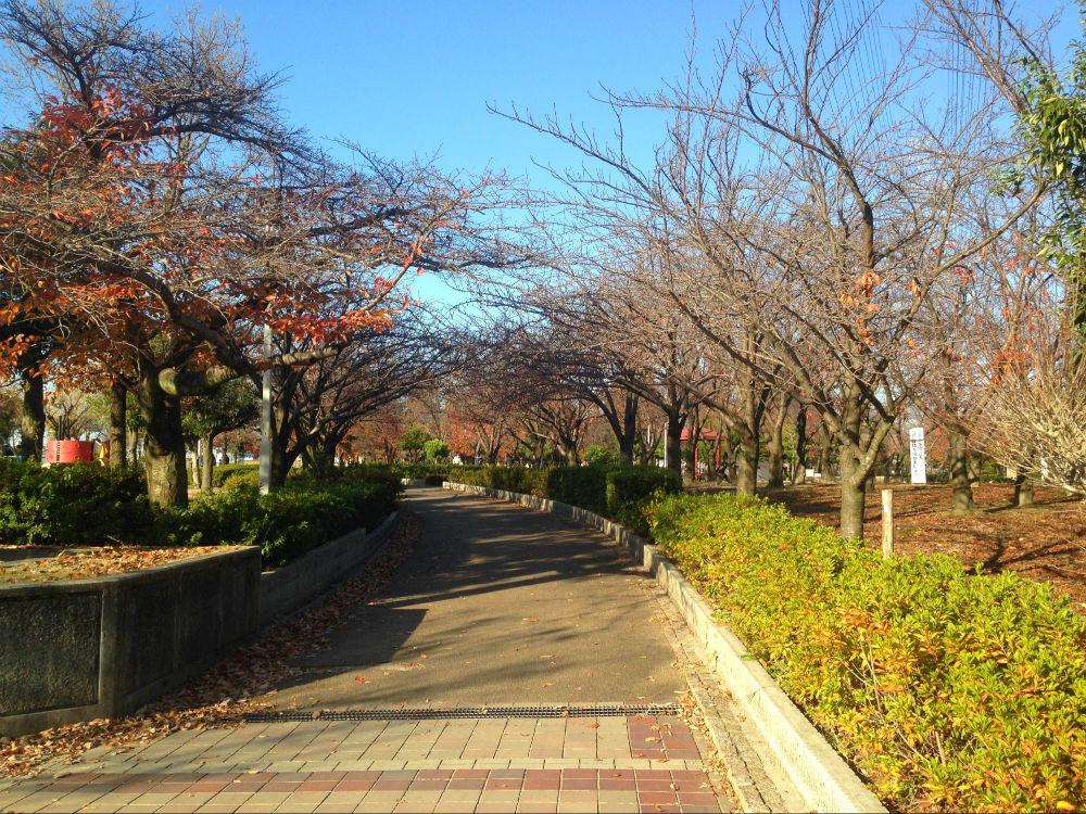 花園中央公園