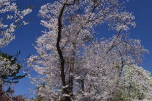 芦野池県立自然公園