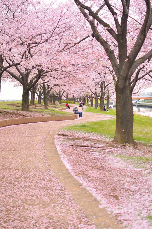 荒川赤羽桜堤緑地