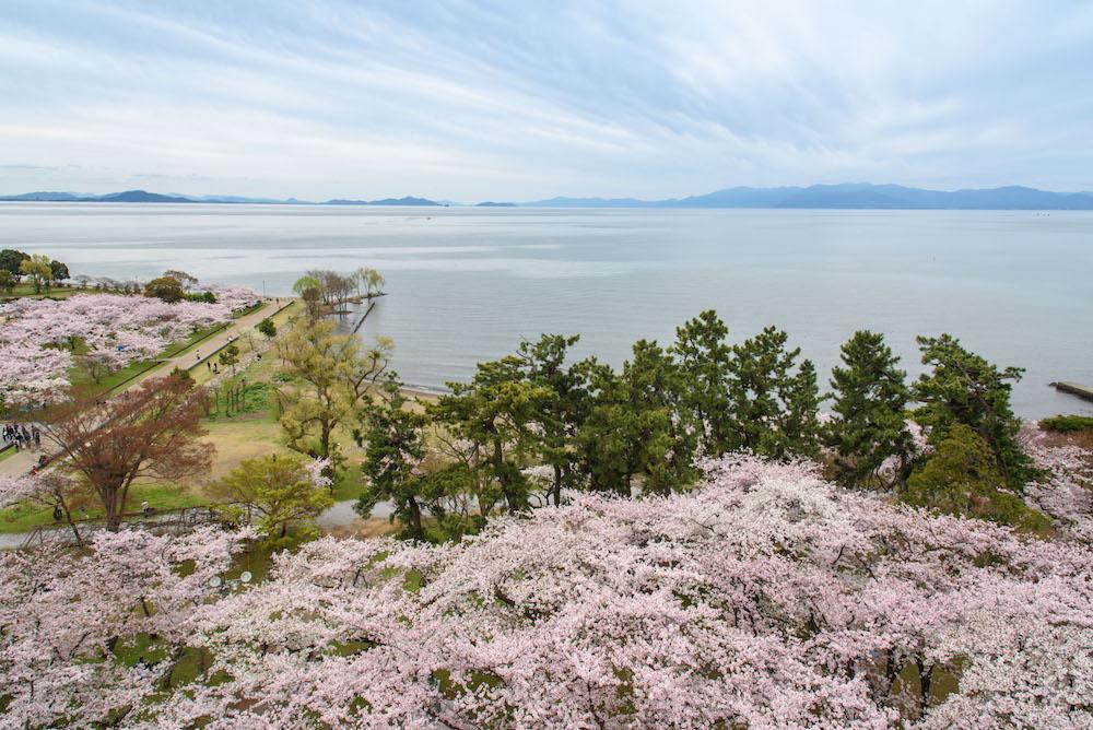 さくら名所100公園:豊公園(滋賀県長浜市)| PARKFUL公園をもっと身近に、もっと楽しく。