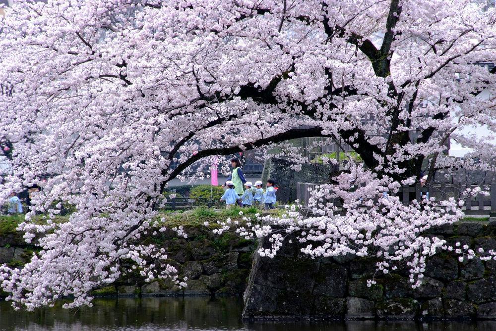 小田原城址公園・城山公園