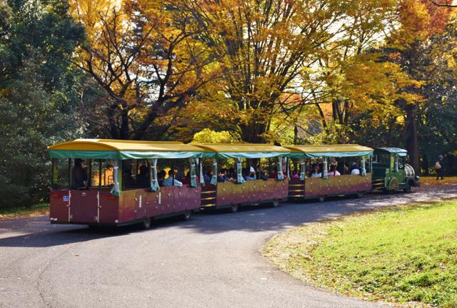 国営昭和記念公園(11)