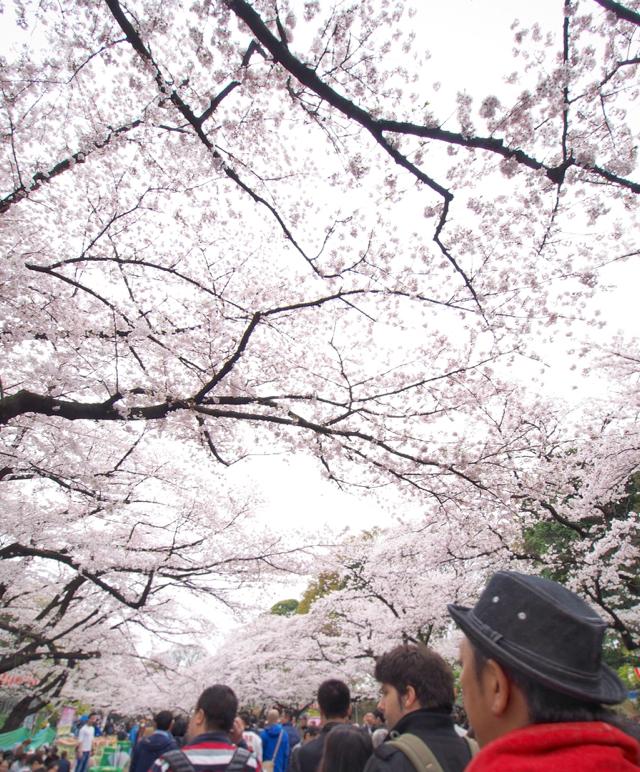 上野恩賜公園(3)