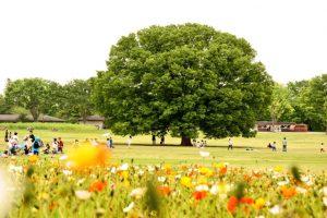 国営昭和記念公園(5)