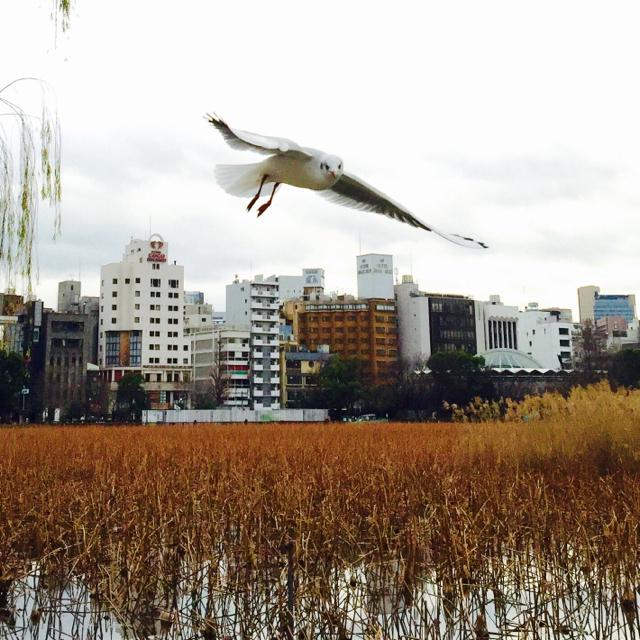 上野恩賜公園 (11)