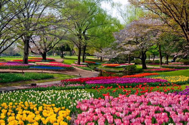 国営昭和記念公園 (4)