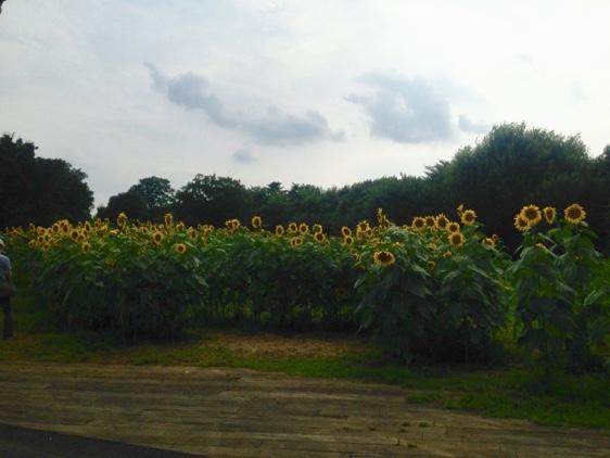 国営昭和記念公園(6)