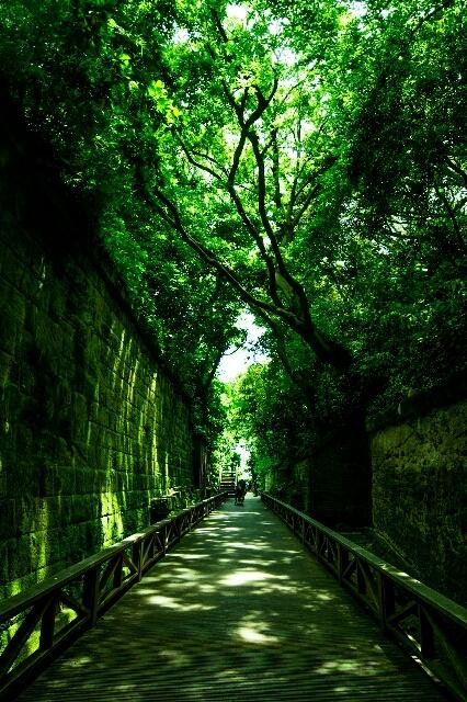 神奈川フォトコン