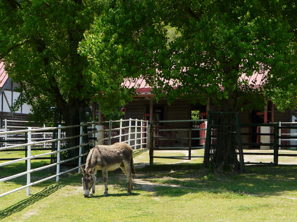 岐阜市畜産センター公園