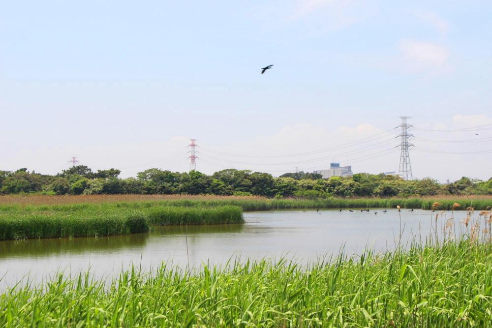 行徳近郊緑地