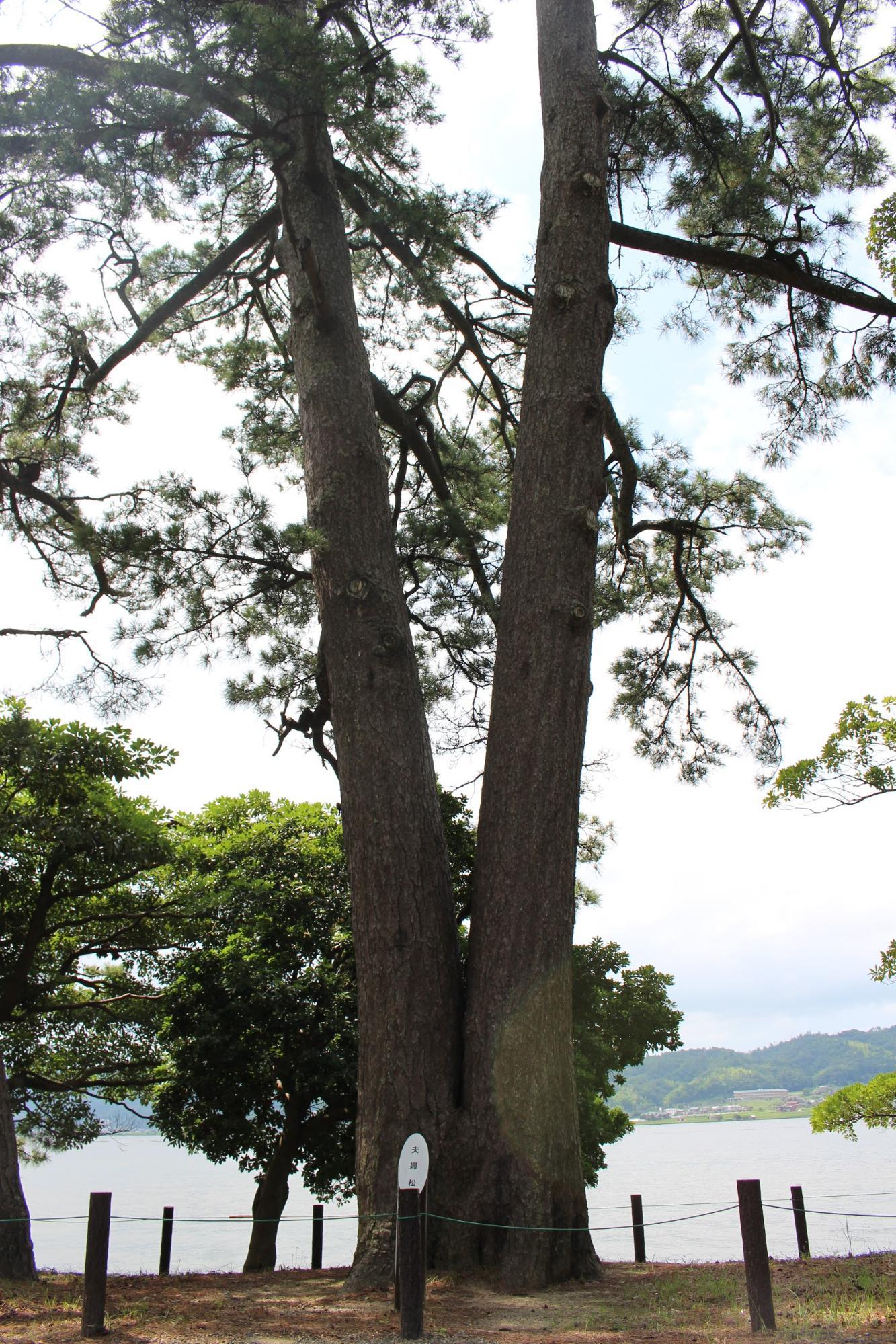 京都府立天橋立公園