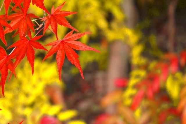 深山紅葉を楽しむ