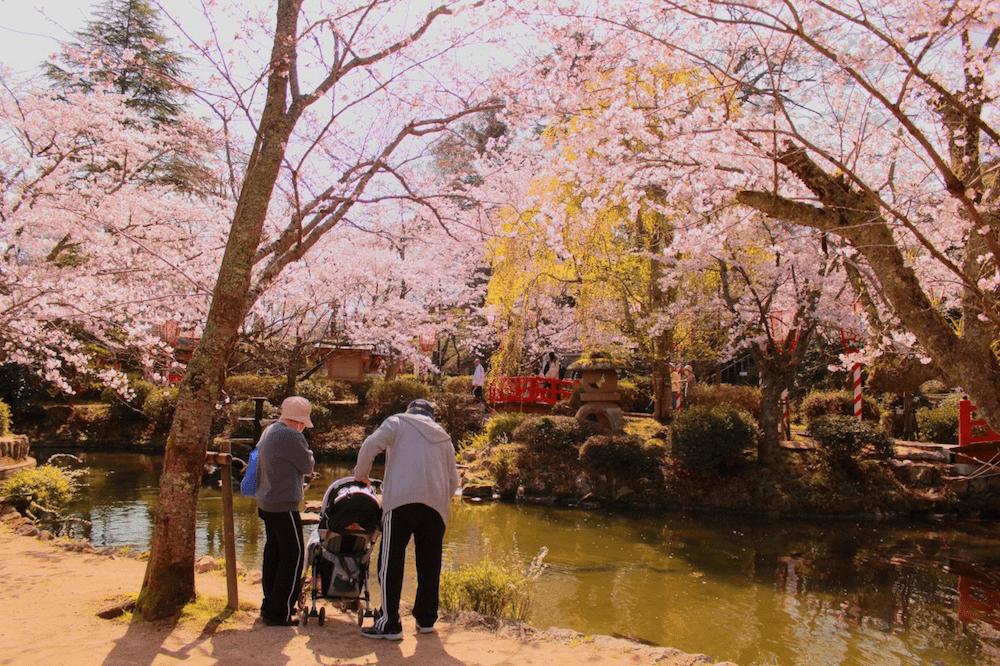 pickup-sakura_打吹公園