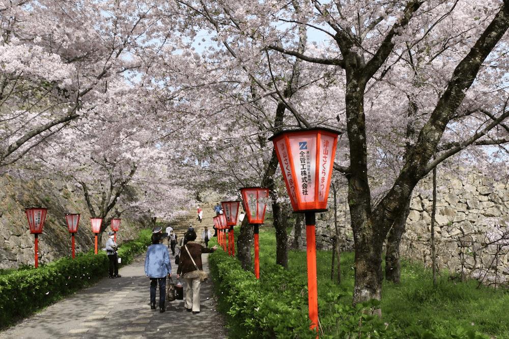 pickup-sakura_鶴山公園