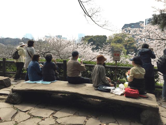 pickup-sakura_北の丸公園