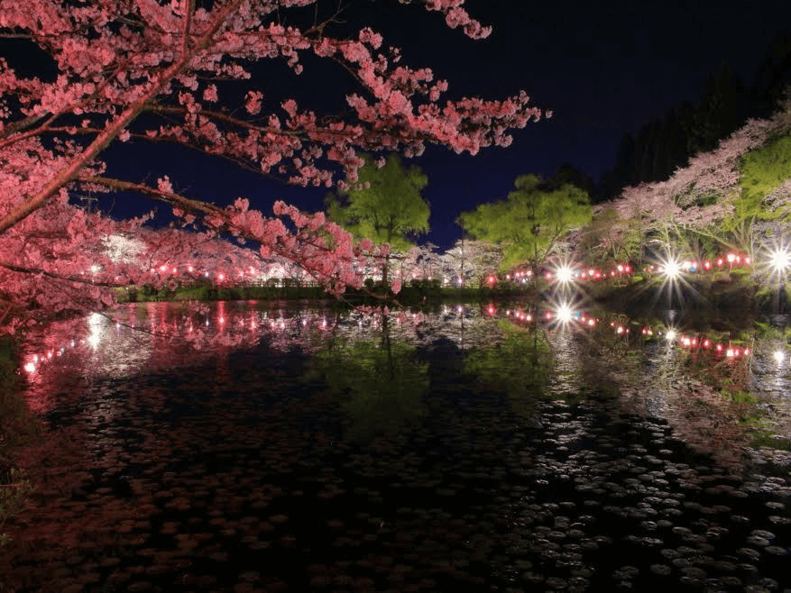pickup-sakura_茂原公園