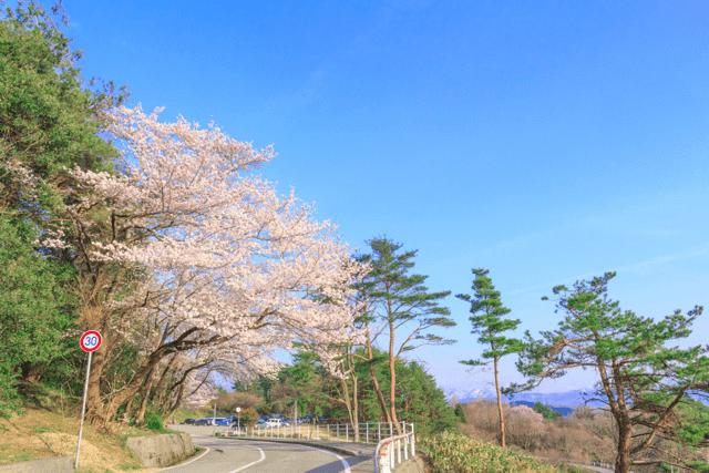 pickup-sakura_奥卯辰山健民公園