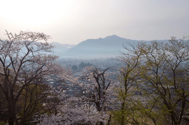 pickup-sakura_亀山公園