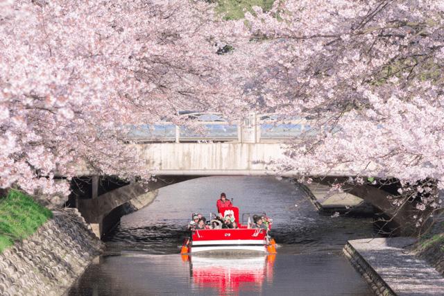 pickup-sakura_松川公園