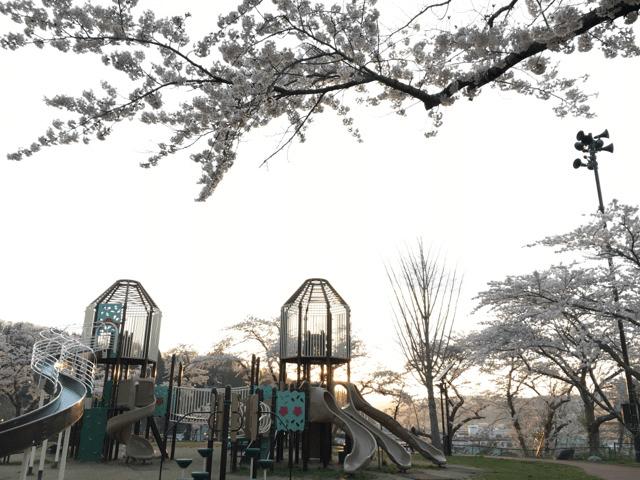 pickup-sakura_巽山公園