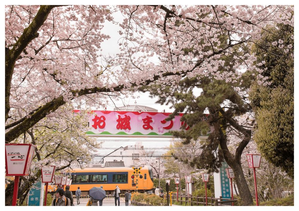pickup-sakura_郡山城址公園