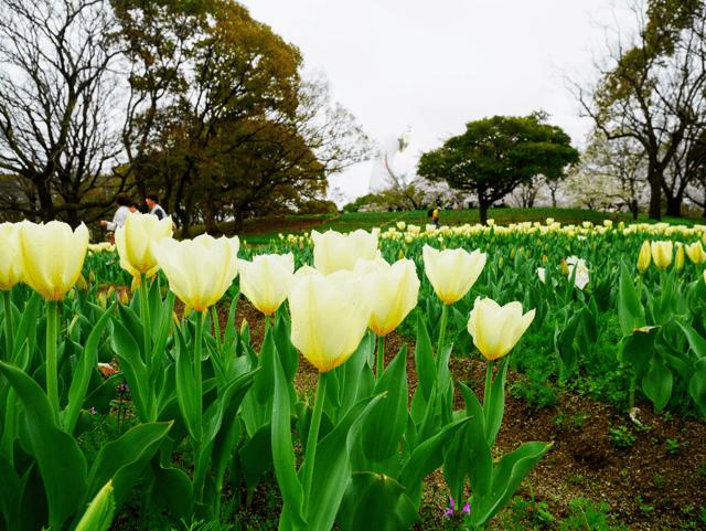 turip_万博記念公園