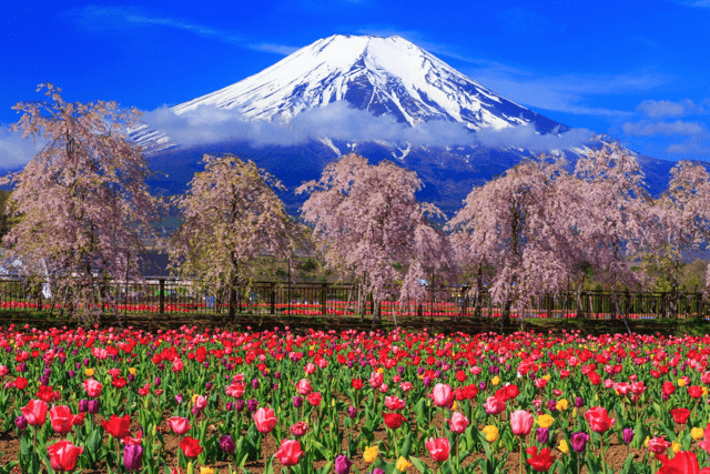 turip_花の都公園