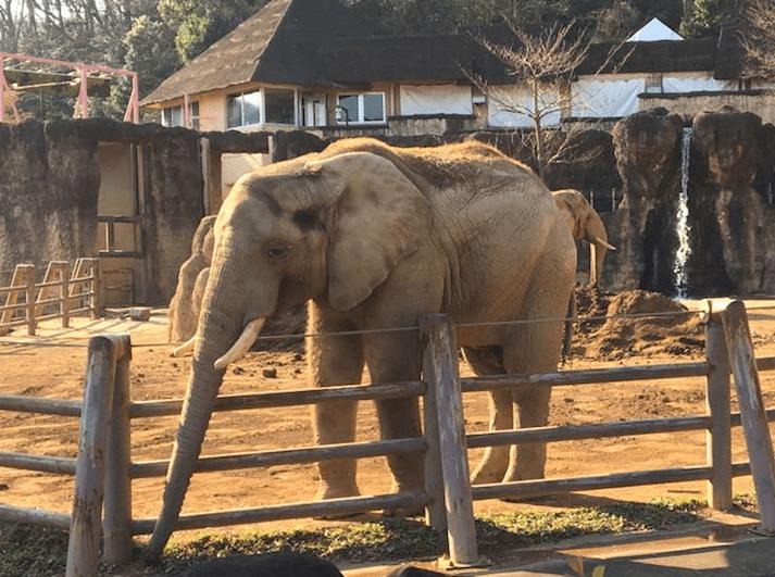 2018GW_多摩動物公園
