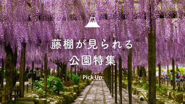 pickup_藤の花特集