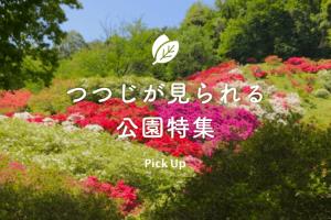 pickup-ツツジ特集