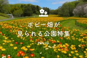 pickup-poppy