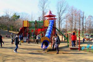 千葉県立柏の葉公園
