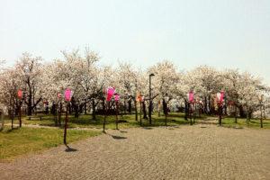 丸子山公園