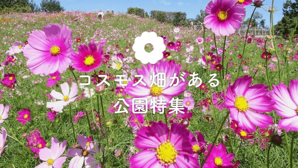 秋を感じるピンク色!コスモス畑のある公園|公園専門メディア